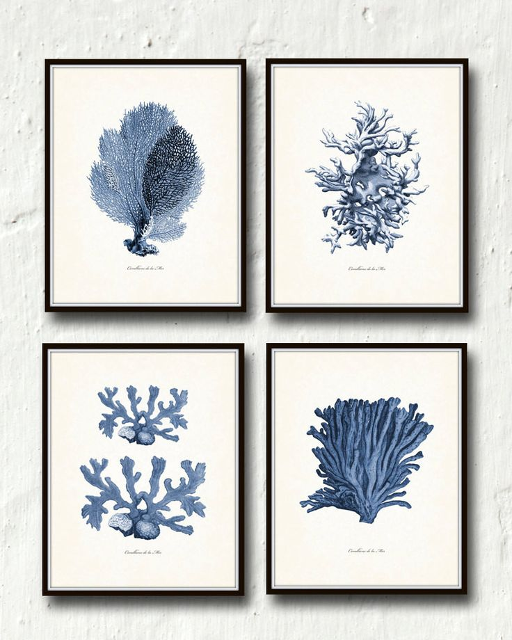 Vintage Indigo Blue Sea Coral Print Set No. 2 – Belle Maison Art– Belle Maison Art – Printed on archival canvas - Makes a charming vintage display - Multiple Sizes - Free US Shipping – Belle Maison Art