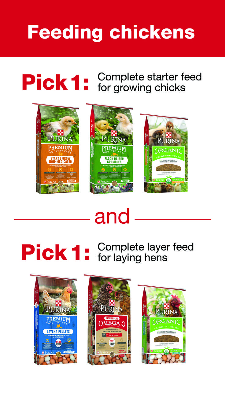 78 best getting started with chickens images on pinterest