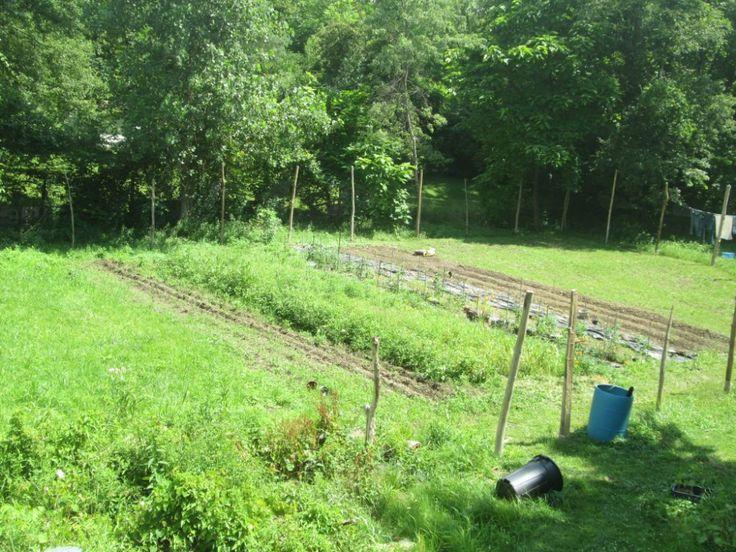 Woodland Urban Farm - An Urban Family Farm in Columbus ...
