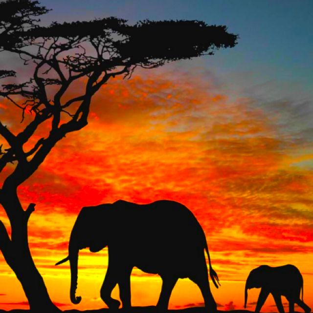 <3 Silhouette of Elephants <3