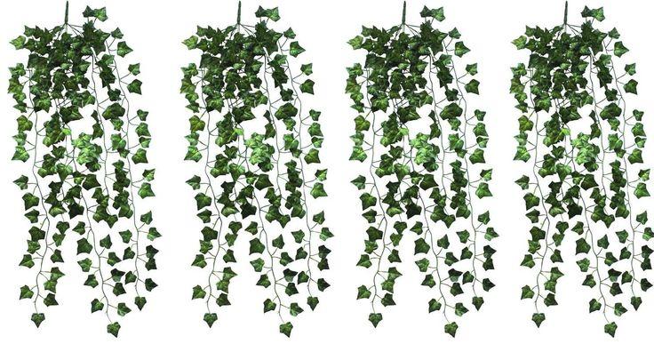 vine plants outdoor