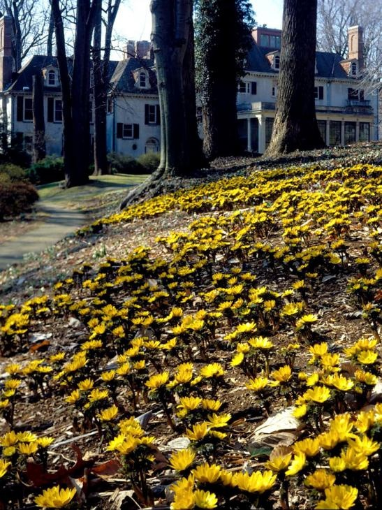 17 Best images about Winterthur Gardens, PA, US on ...