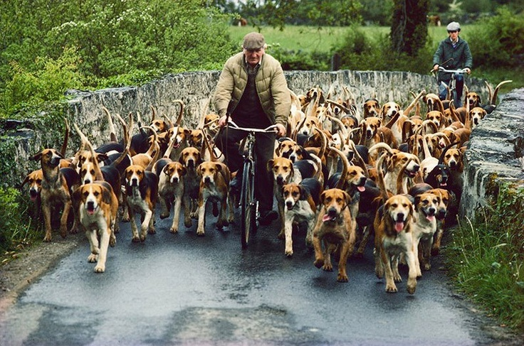 this made me grin! it's a dog herder? that's so many dogs ...