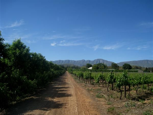 Boesmansdrift Farmhouse - Bonnievale self catering  weekend getaway accommodation Western Cape | Budget-Getaways South Africa (Fruit and wine farm with a spacious house set 1.4km from the Breede River)