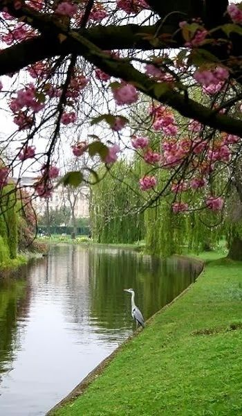Wildlife in Regent's Park, London, England