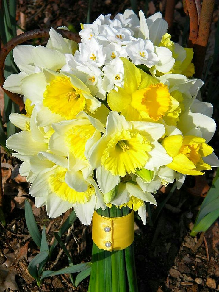Spring Wedding Bouquet Arranged With: Yellow & Yellow/White Narcissus & White/Yellow Paperwhites~~