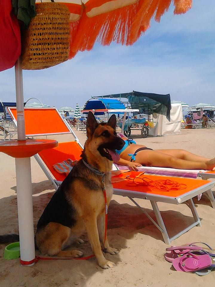 Falconara Marittima Palombina Tropical Beach Qui I Cani Di