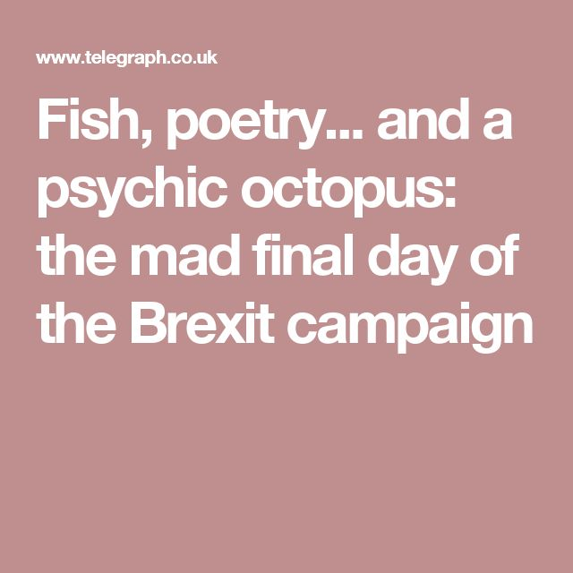 Fish, poetry... and a psychic octopus: the mad final day of the Brexit campaign