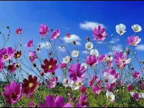 ♥OMAR AKRAM - Dancing with the wind♥ - YouTube