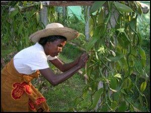 Vanille de Madagascar.  Un jeune esclave, Edmond Albius, découvre une technique de fécondation manuelle de la fleur.
