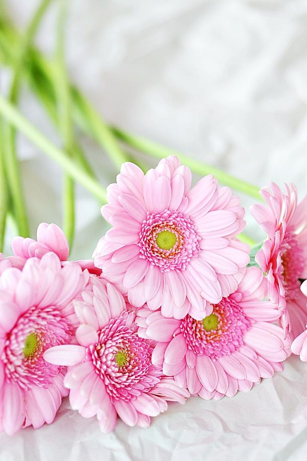 {happy pink daisies}