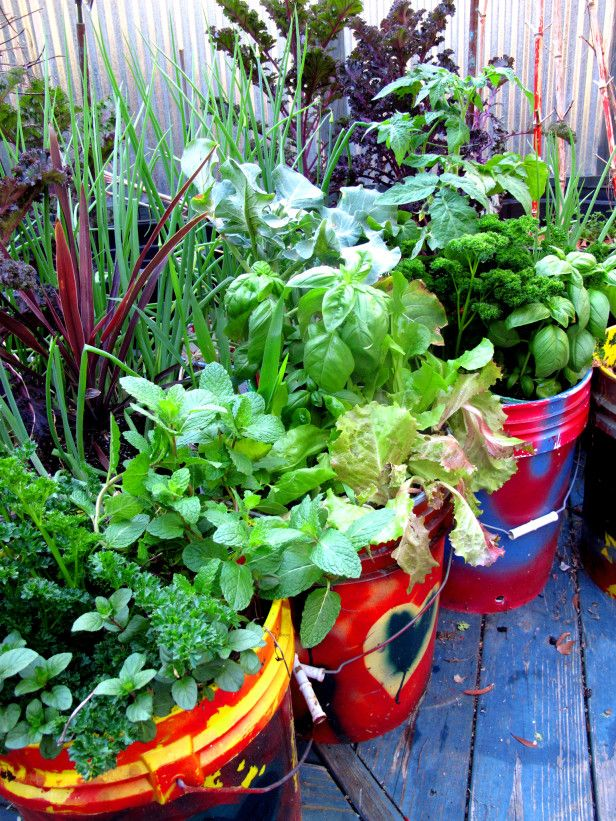 HGTVGardens contributor Felder Rushing recommends large 5-gallon buckets as patio containers for baby carrots, peppers and more --> http://hg.tv/pz6z