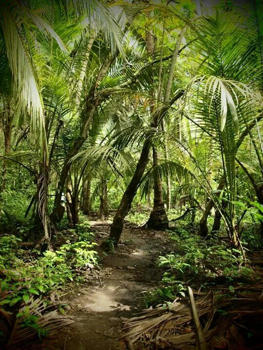 Hiking through the jungle to get to the astonashing beaches of Parque Tayrona - Colombia May '13