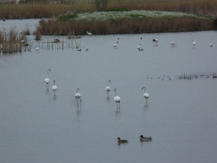 Una gran diversitat d'aus viu al Riet Vell.