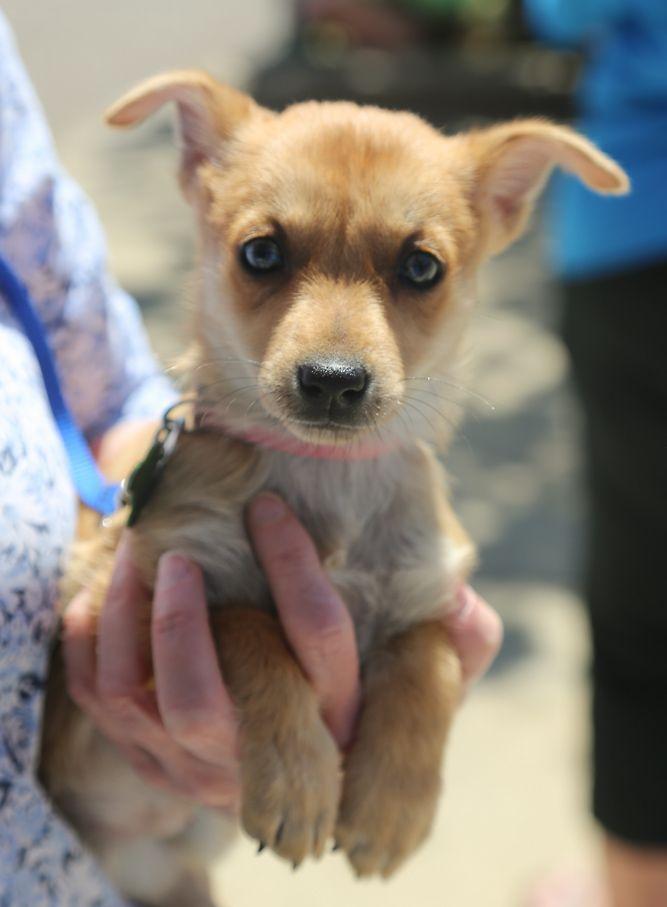 Miniature Pinscher dog for Adoption in Nesbit, MS. ADN-521145 on PuppyFinder.com Gender: Female. Age: Baby