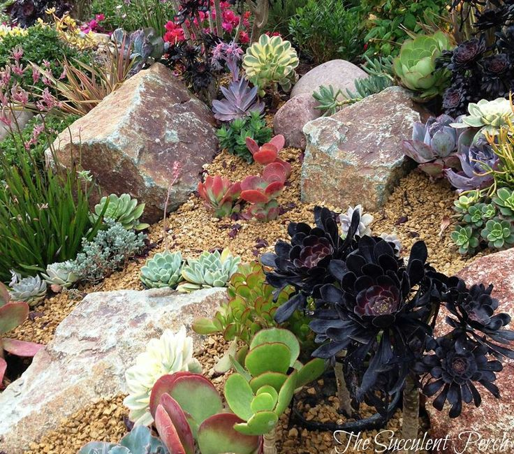 Succulents work well planted on a hillside slope this for Hillside rock garden designs