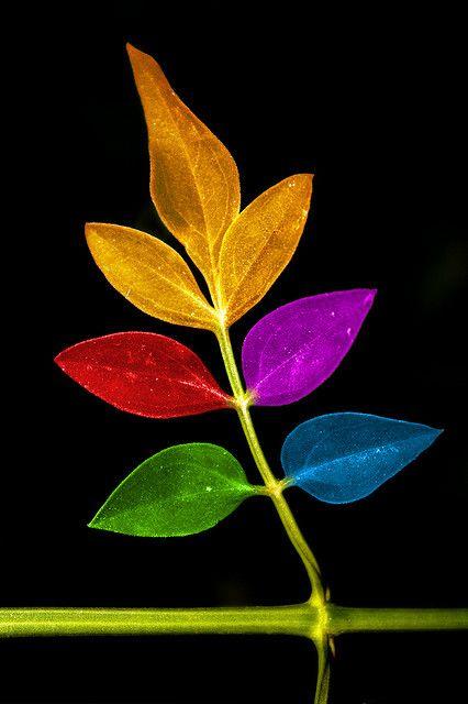 ressemble à une feuille d'automne avec les couleurs de l'automne voilà