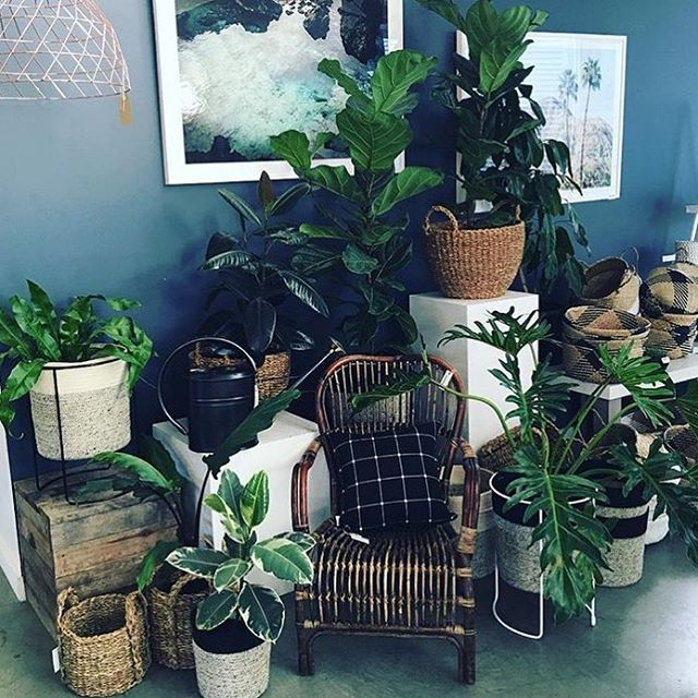 Ivy Muse | 'Chameleons' in Black and White | Wowsers! We love what's happening at our Bayside stockist @gillsnursery #ivymuse #nursery #indoorplants