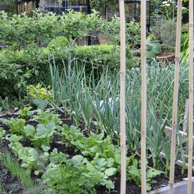 A well maintained vegetable plot will require lots of physical work, exactly what the doctor ordered.
