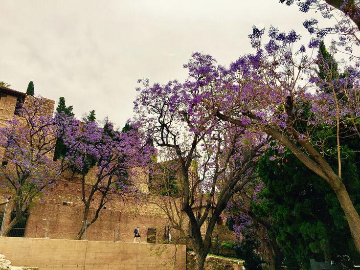Malaga (16 mai 2017)