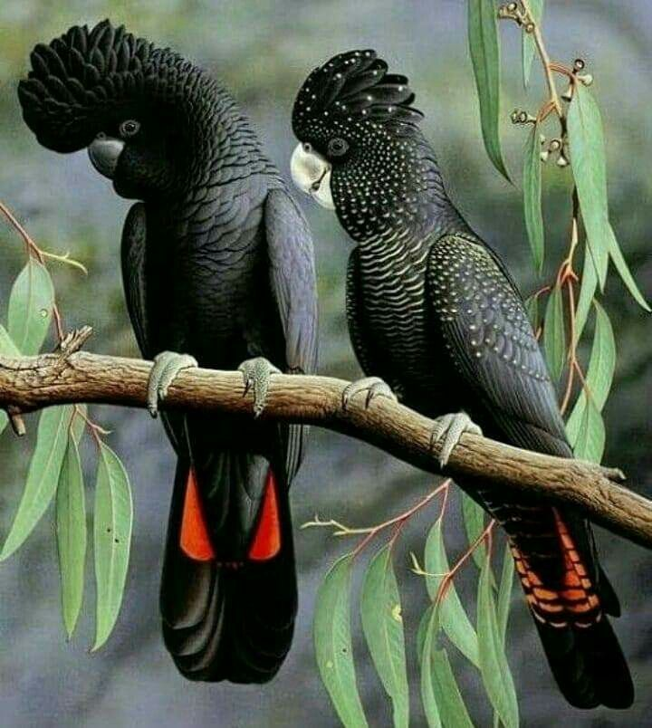 Pin By Lawrence Perry On Birds Pet Birds Birds Animals Beautiful