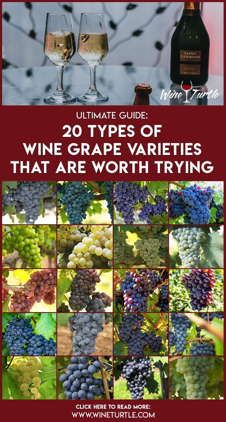 Explaining The 20 Most Popular Grape Varieties Grapes Types Of Wine Red Grapes
