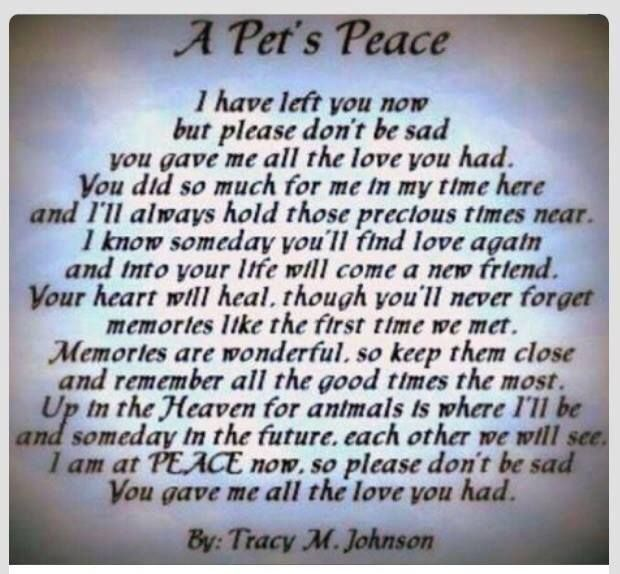 Prayer For Deceased Pets Just B Cause