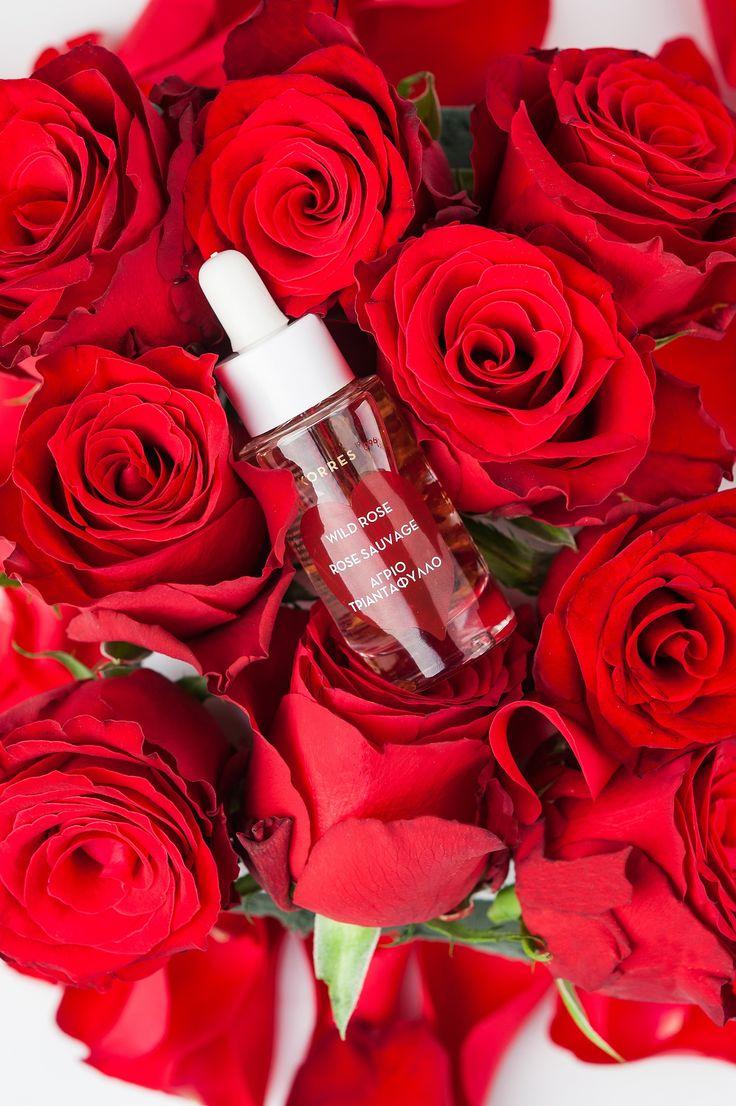 #korres20 Wild Rose Face Oil