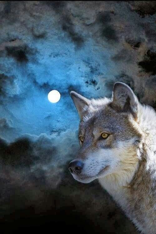 Wolf and full moon | Animals-Wild Canine #9 | Wolf ...