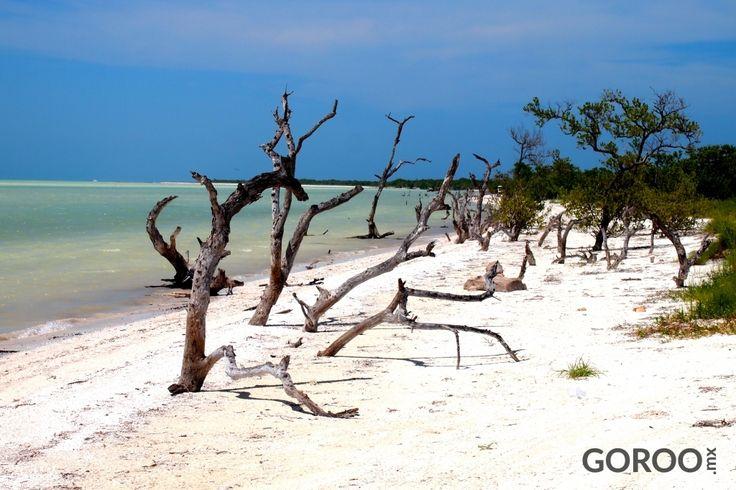 Holbox Island. More Than Paradise!