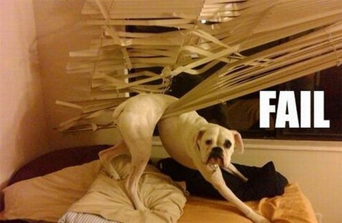 Hilarious: Puppies, Cat, Funny Dogs, Pet, Funny Stuff, Boxers, Funny Animal, So Funny, Funnystuff
