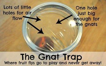 My family and I have experienced many health problems because of the most annoying insects, called gnats or nats (sometimes spelled as knats). I have used a number of different methods to successfu…