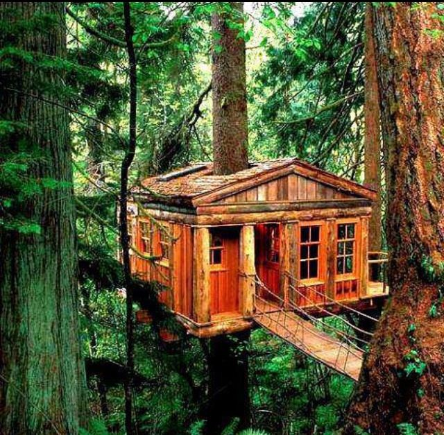 Treehouse Masters Treehouse Point: 78 Best Tree House Images On Pinterest