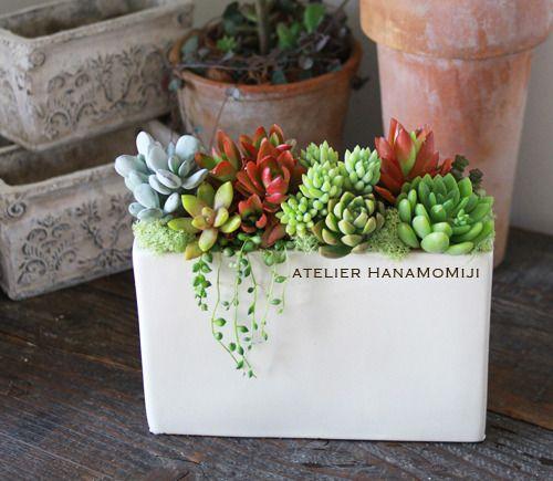 ハンドメイドマーケット minne(ミンネ)| スクエア陶器の多肉植物寄せ植え