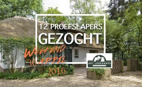 Het Lorkenbos | Vakantiehuis of camping op de Veluwe?