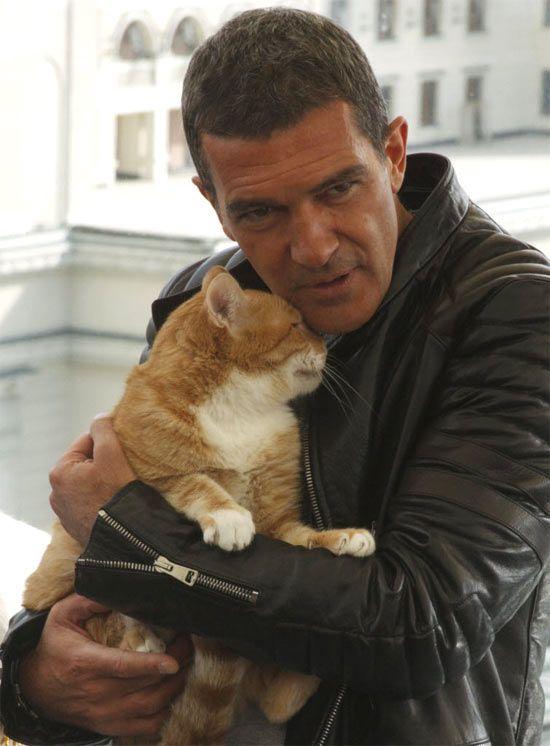 ai q meigo... o gatinho/a no colo do Antonio Banderas, Banderas, Gatos, Gatas, Gato de Botas