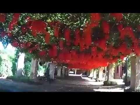 Amazing nature jade flowers and magic suiseki
