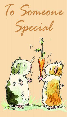Guinnea pig special postcard