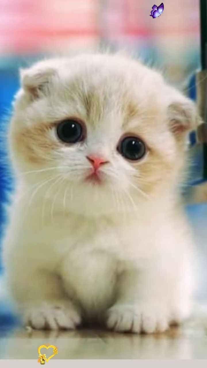 Pets Kittens Cute Kittens Kittens Videos Kitten Boy Little Kittens Kitten Pets Kittens Cute Kittens Kitten In 2020 Baby Cats Cutest Kittens Ever Cute Cats