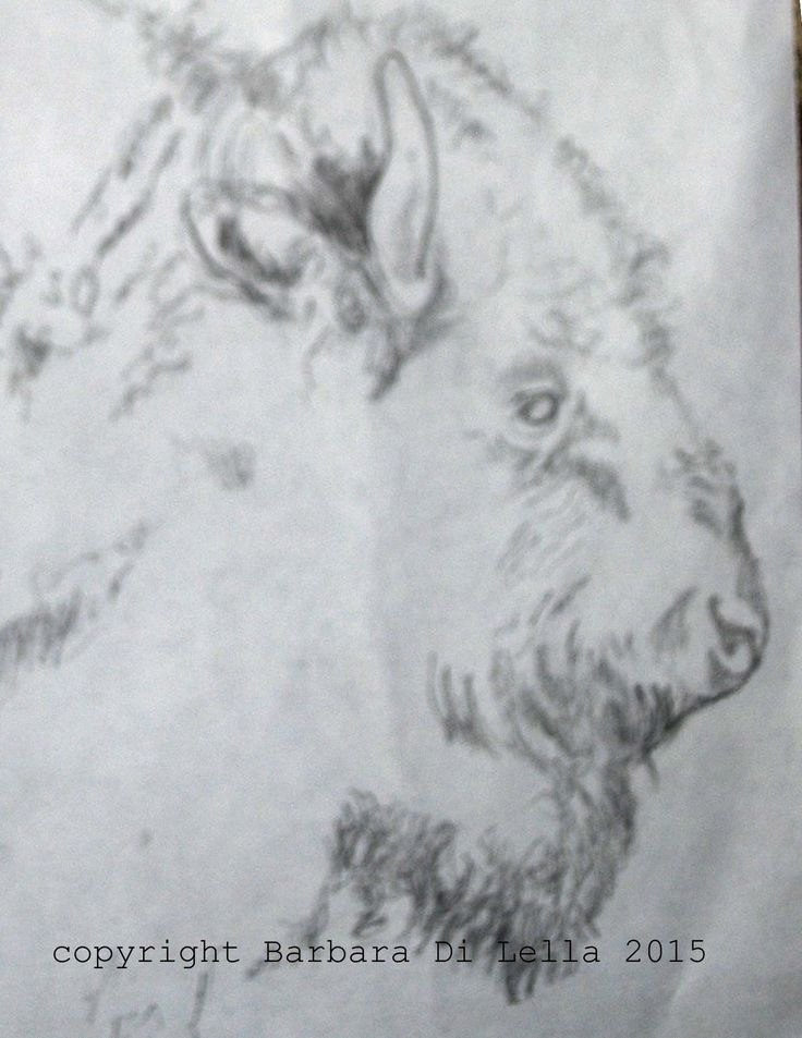 Bison. This quick sketch of a bison was among several that I did before arriving at the drawing that went all the way to being burned onto a screen and subsequently printed. The final version can be seen at www.sparrowavenue.etsy.com