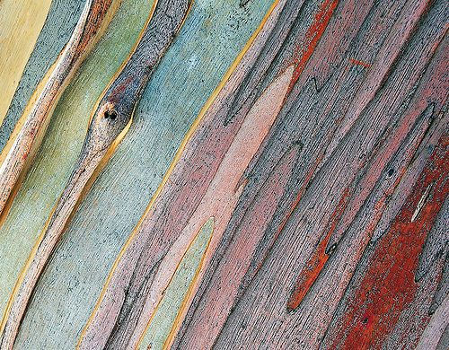 Snow gum patterns and textures by Tanya Puntti (SLR Photography Guide), via Flickr