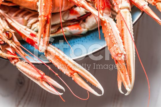 Freshly cooked langoustines as a seafood dish royalty-free stock photo
