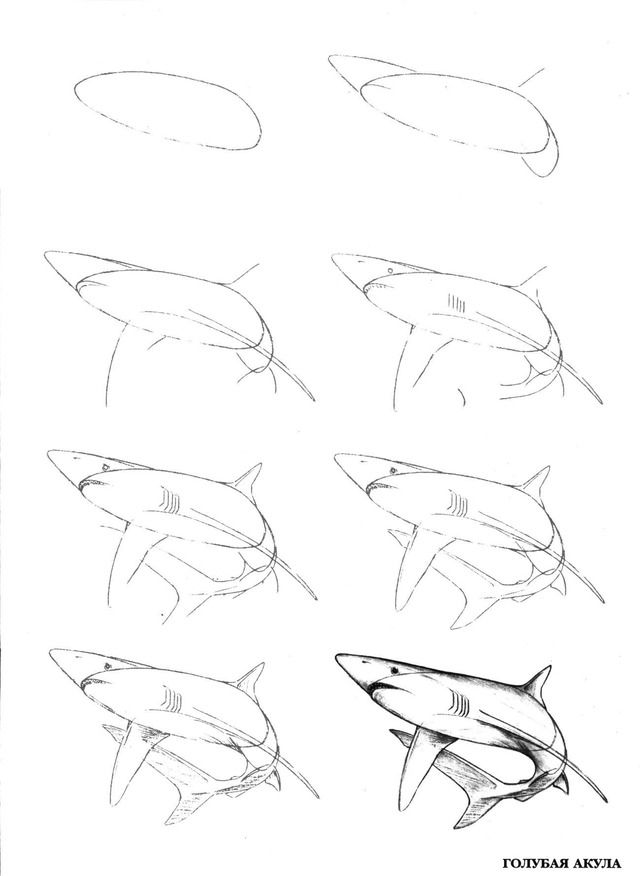 Акула картинки поэтапно жилых