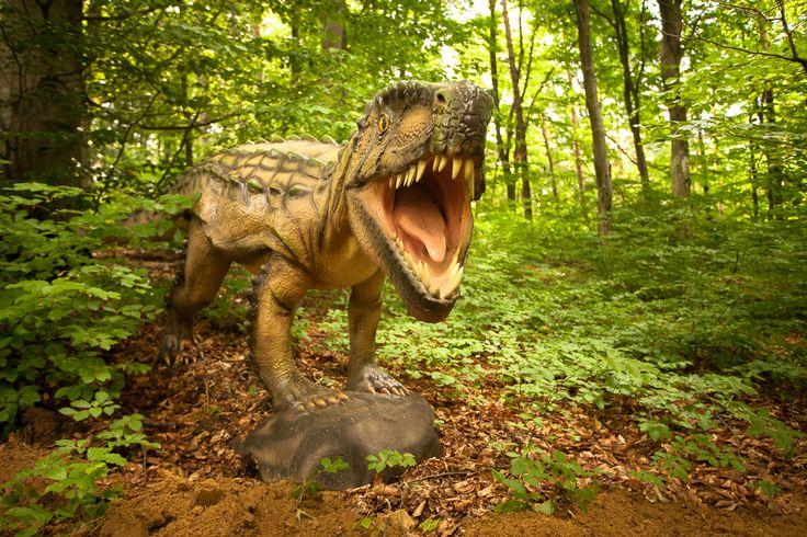 Cel mai mare parc cu dinozauri din Sud-Estul Europei se deschide vineri, 12 iunie 2015, la Rasnov. x