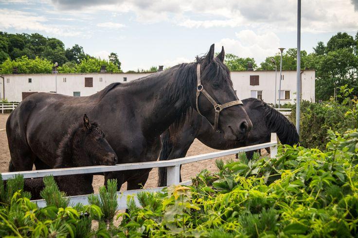 Breakfast with family - śniadanie z rodzinką :)   #horses #family #konie #rodzina