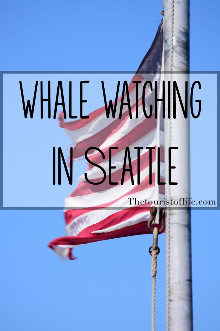 Seattle Whale Watching - The Tourist Of Life
