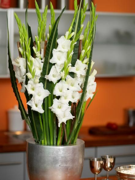 Adding cut flowers in vases or vessels is the quickest and easiest way to add life to any room. Learn which flowers will work best for your space with regard to care, safety and upkeep.