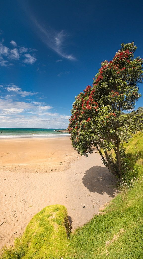 Golden sand beach, Tutukaka Coast, Northland, New Zealand