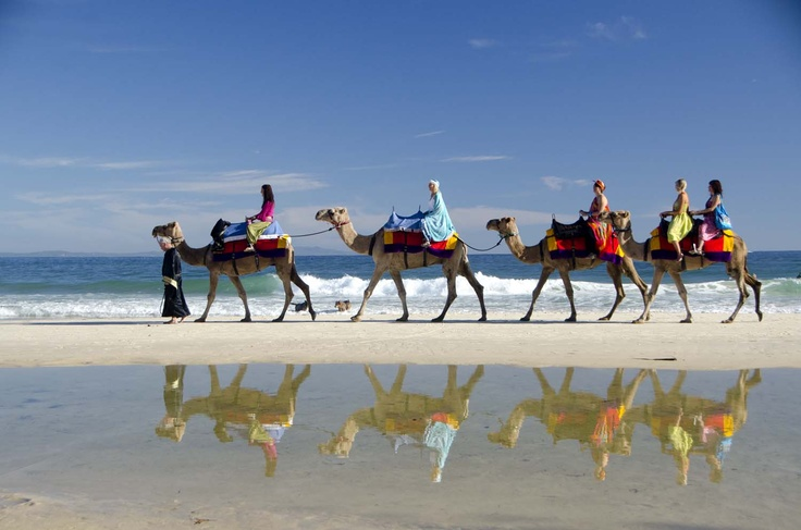 Ride a Camel along the beach at North Stradbroke Island. #Straddie #fun  #weloveStraddie