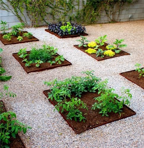 Gardening in Arizona - this is a vegetable garden in 3x3 square beds edged with steel to collect precious rainwater